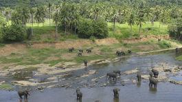Srí Lanka, slony, palmy, sirotinec, sloní sirotinec, rieka, džungľa