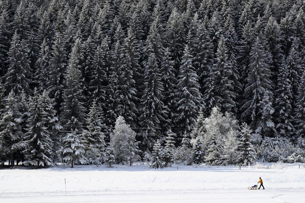 zima, sneh, sánky, sane,