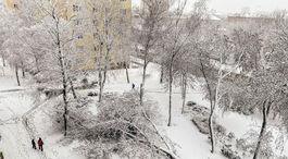 spadnuty strom, sneh, kalamita, pocasie, kalamita, sneh, Kosice, cesta, dopravna situacia