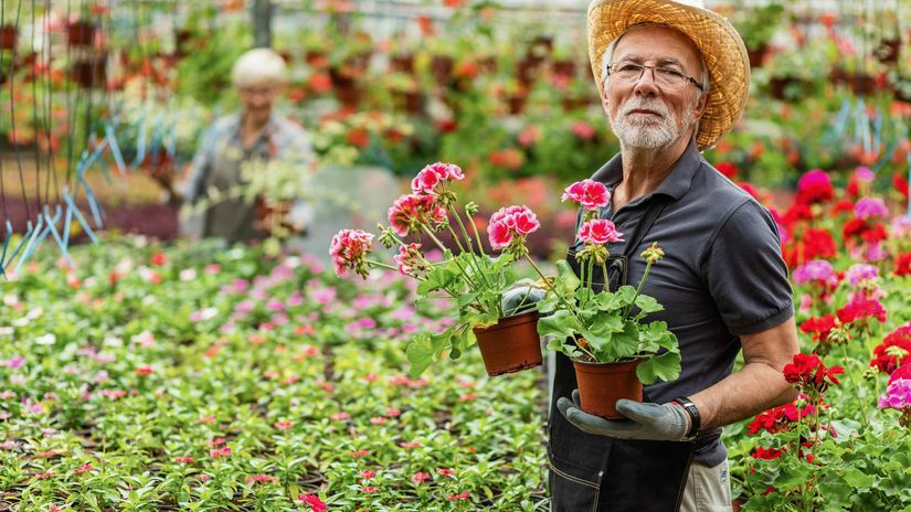 penzista, záhradník, kvetinárstvo, pracujúci...