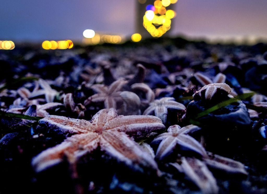 morské hviezdice, more, pláž