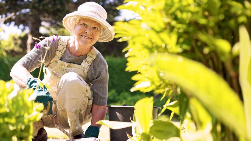 dôchodkyňa, záhrada, radosť, záhradkárčenie