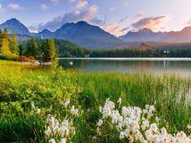 príroda, les