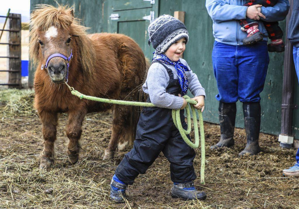 Colorado, poník, kôň