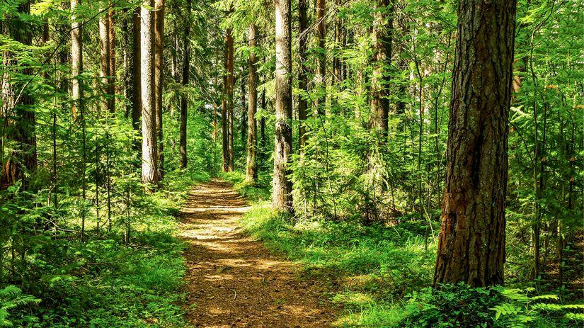 les, príroda, chodník, cestička