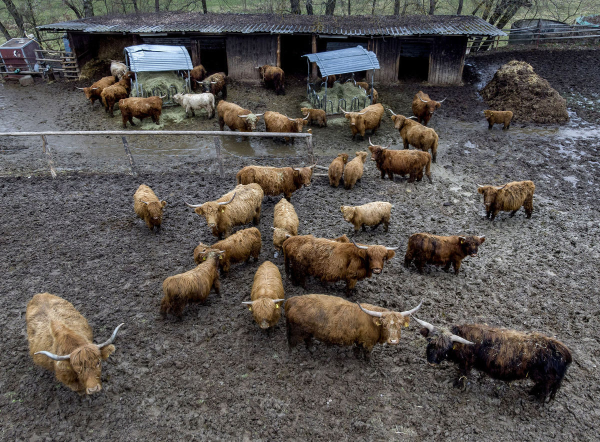 dobytok, kravy, chov