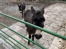 Zoo v Spišskej Novej Vsi