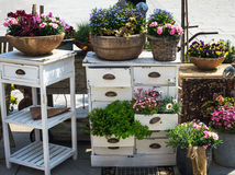 Colorful bushes of spring flowers, planted in old pots, buckets and boxes with white furniture. New direction in floral decor. Floriculture.