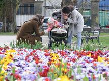 počasie, kočík, koronavírus, jar, kvety