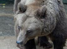 medveď, zoo
