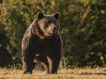 Lichtenštajnský princ zastrelil najväčšieho medveďa v Rumunsku, prípad sa vyšetruje ako možné pytliactvo