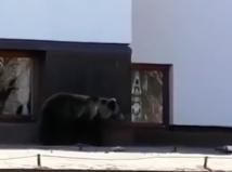 medveď na hrebienku