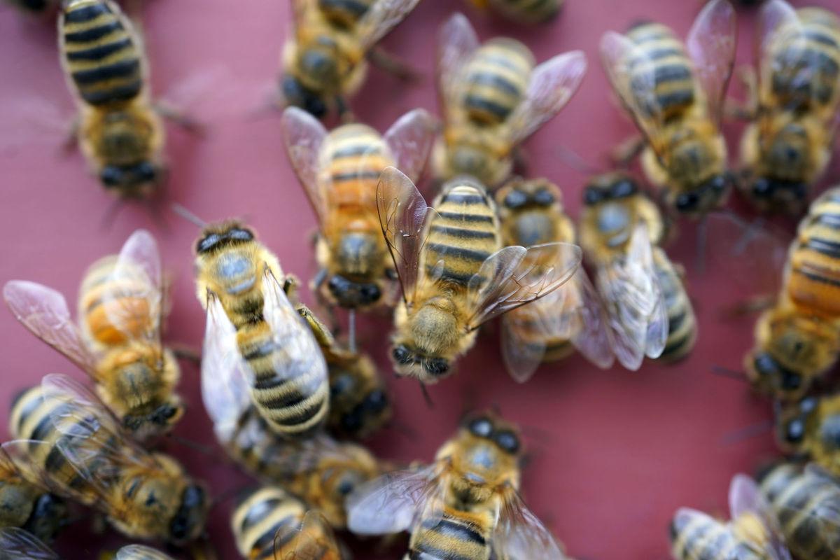Massachusetts, včely, úľ