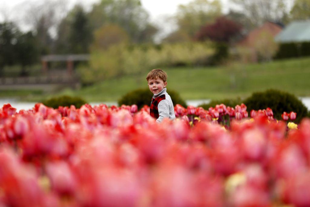 Illinois, chlapec, dieťa, tulipány,