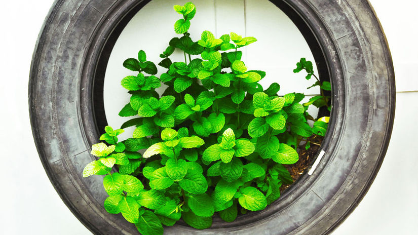 recycle of tire used in organic vegetable