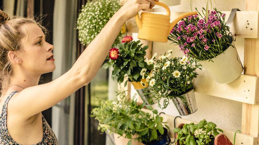 balkón, kvety, voda, žena, rastliny