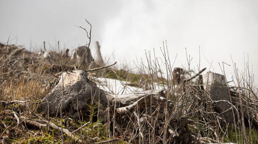Kilianka, prales