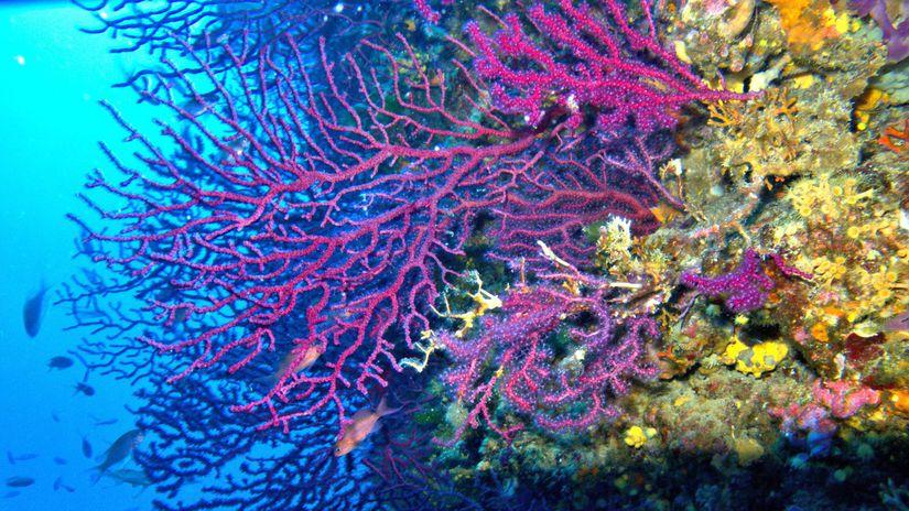 Koraly vejarovniky FOTO Lorenzo Merotto