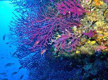 Koraly vejarovniky PHOTO Lorenzo Merotto