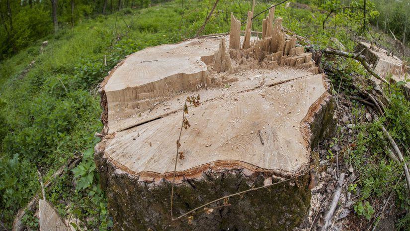 Strom / Peň /