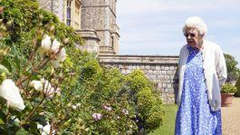 Britain Royal Rose