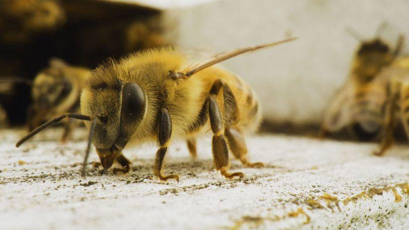včela, charlieho včelia farma,