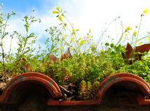 zelené strechy, zelená strecha