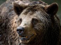 medveď, ZOO, seriál