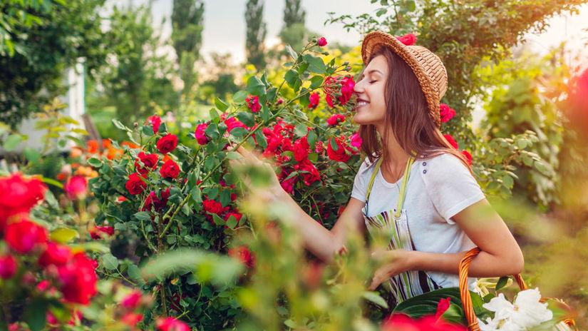 voňavé ruže