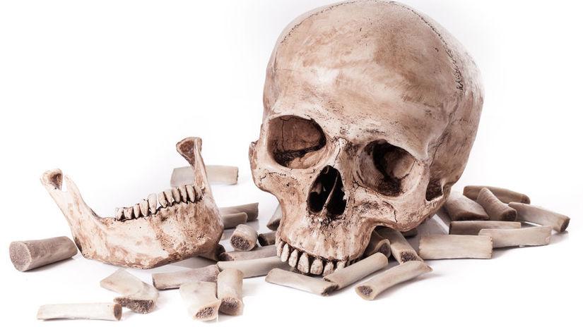 kosti  kostra