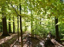 SR Havešová NPR Národná prírodná rezervácia mŕtve drevo