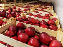 uskladňovanie ovocia