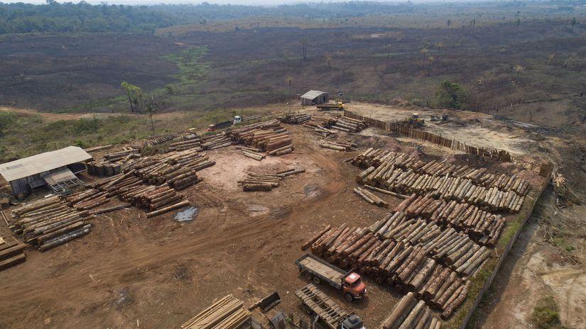 odlesňovanie