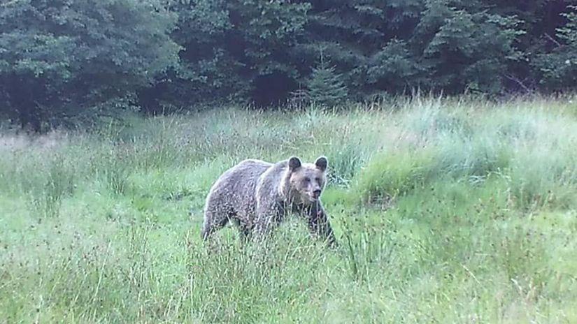 medveď, pastier, kataster Nevoľného