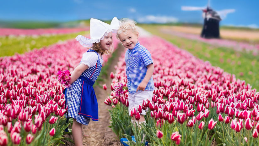 Happy Dutch children playing in blooming tulip...
