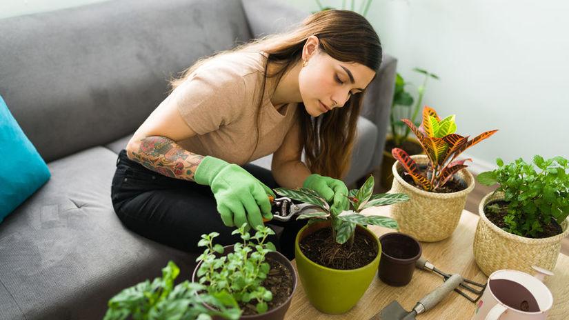 strihanie izbových rastlín