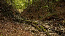 Muránska planina, prírodná rezervácia, Javorníková
