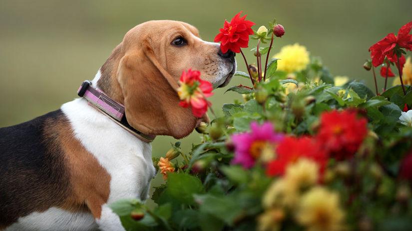 rastliny a domáci miláčikovia