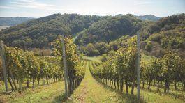 Green wineyards of winemakers in rural area of Croatian Zagorje, beautiful, green region near city of zagreb