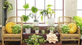 Homes-Housewarming Gifts